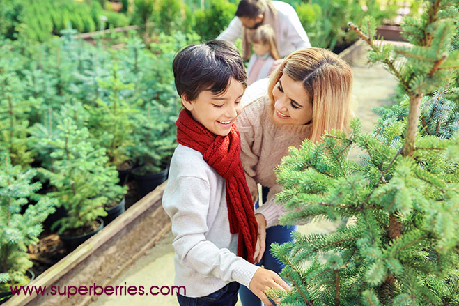 Family at Christmas Tree Farm Superberries Blog