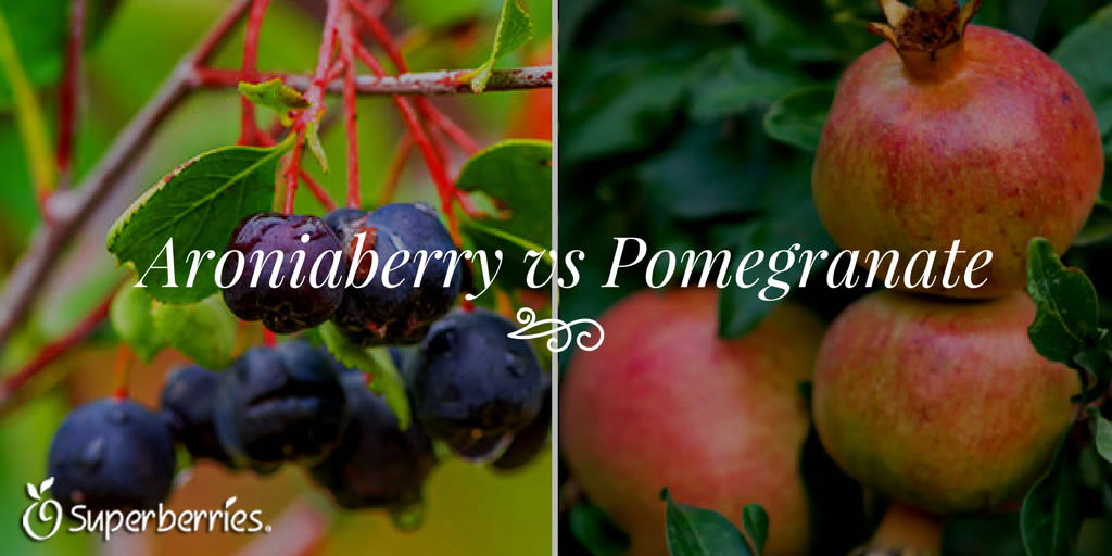 Aroniaberry vs Pomegranate